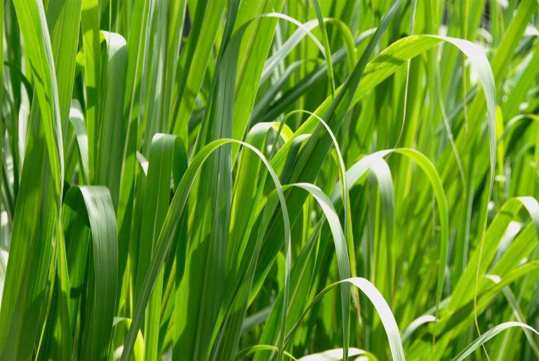 Grass Macro High Resolution-768x515