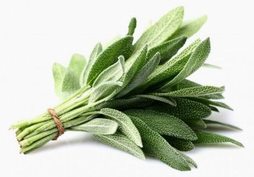 Bouquet-de-feuilles-de-grande-sauge-e1466150541365
